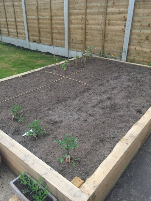 The new veggie plot